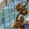 Muscheln aus dem Ebrodelta - das Musclarium 11