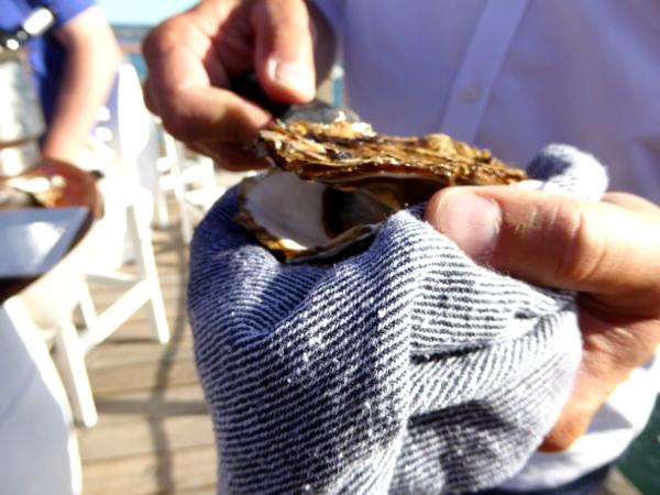 Musclarium Muscheln Ebrodelta Freibeuter reisen austern öffnen flache seite oben