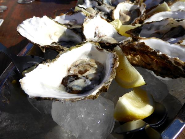 Musclarium Muscheln Ebrodelta Freibeuter reisen teller frische Austern
