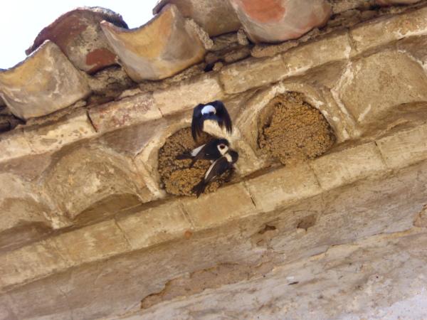 Pals schwalben Nest Schutz gegen Malaria Glaube