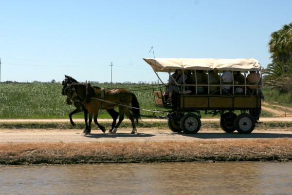 Reis im Ebrodelta freibeuter reisen ankunft der pflanzer