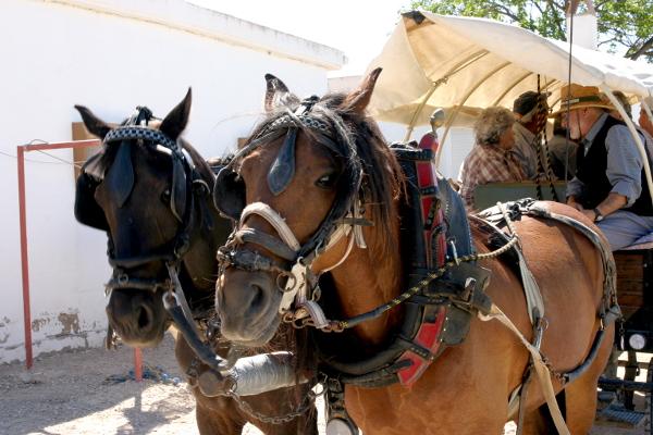 Reisanbau im Ebrodelta Pferdekarren freibeuter reisen
