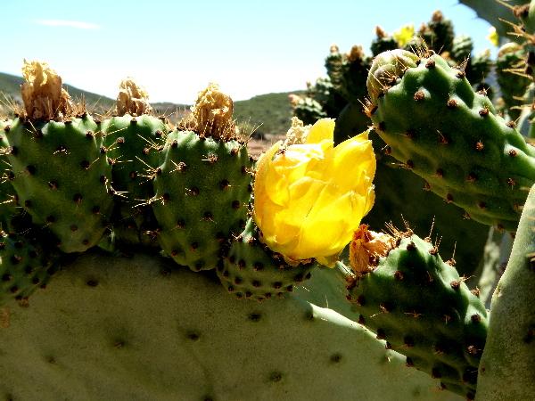 Temps de Terra Masia Ebrodelta Freibeuter Reisen kaktus
