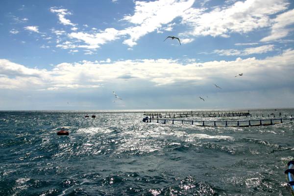 Thunfisch schorcheln Freibeuter reisen tuna tours becken