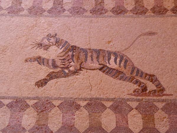 Tiger Mosaike Kato Paphos Zypern