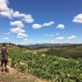 Die guten Weine des Montsant : La Placeta 14