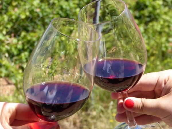 Weinverkostung La Placeta Montsant Weine Freibeuter Reisen
