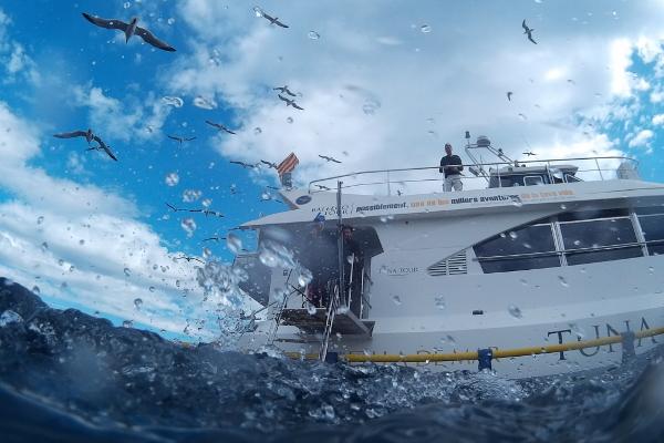 Thunfisch becken