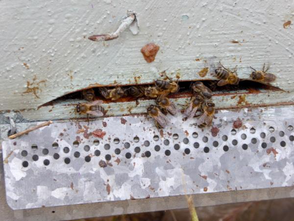 bienen honig Freibeuter reisen Bienenstock eingang