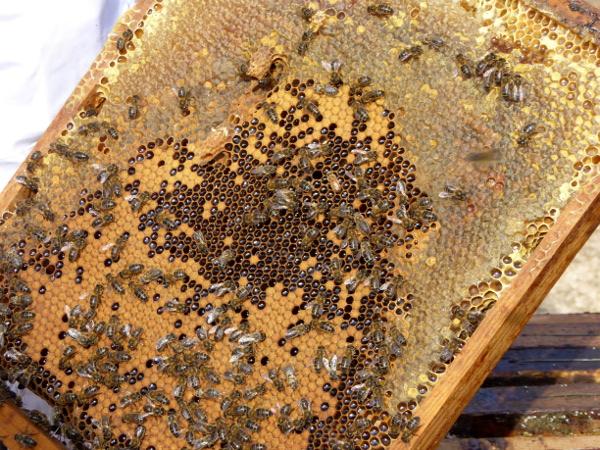 bienen honig Freibeuter reisen bienenwaben honigwaben