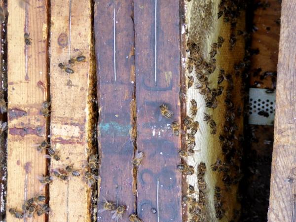 bienen honig Freibeuter reisen ein bienenstock geöffnet