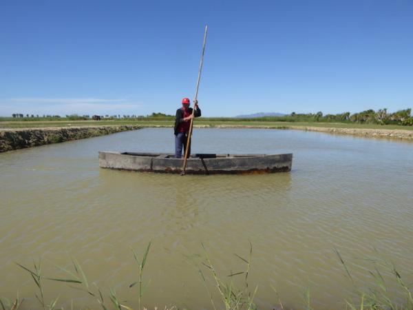 boot Reisfelder im Ebrodelta freibeuter reisen
