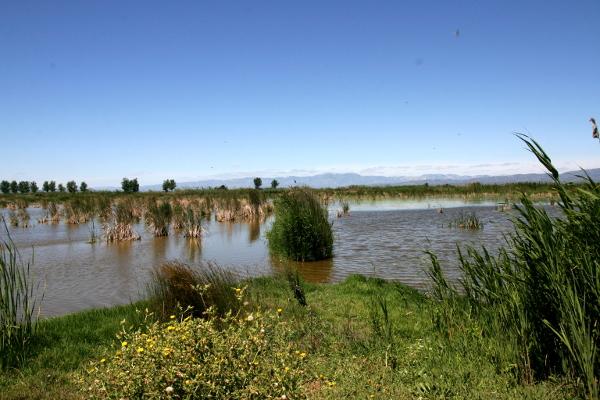 im Ebrodelta freibeuter reisen Naturpark
