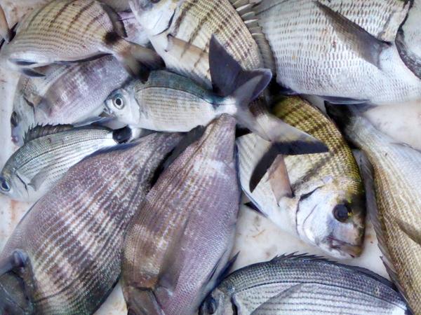 Hafen Roses Fischer Freibeuter Reisen fische gefangen