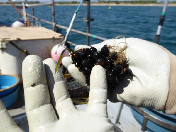 Hafen Roses Fischer Freibeuter Reisen tintenfischeier