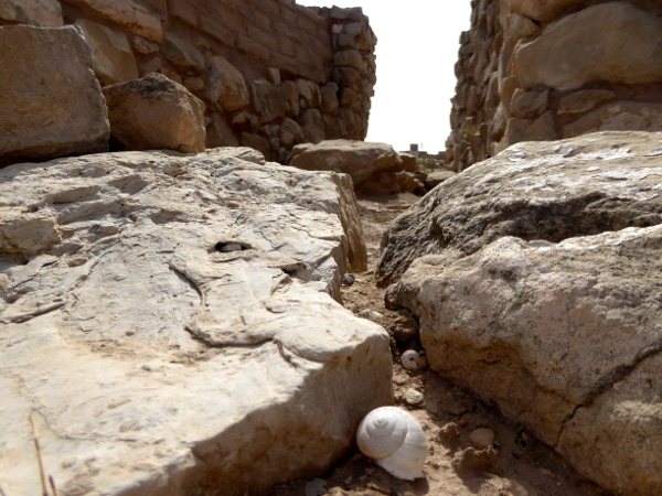 schnecke archäologische ausgrabungen iberer siedlung Arbeca freibeuter reisen