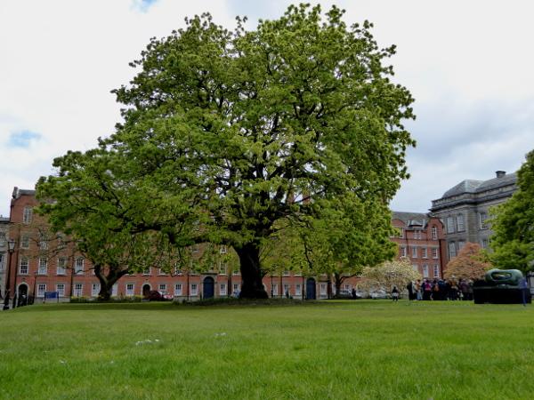 Dublin Baum Trinity college Freibeuter reisen
