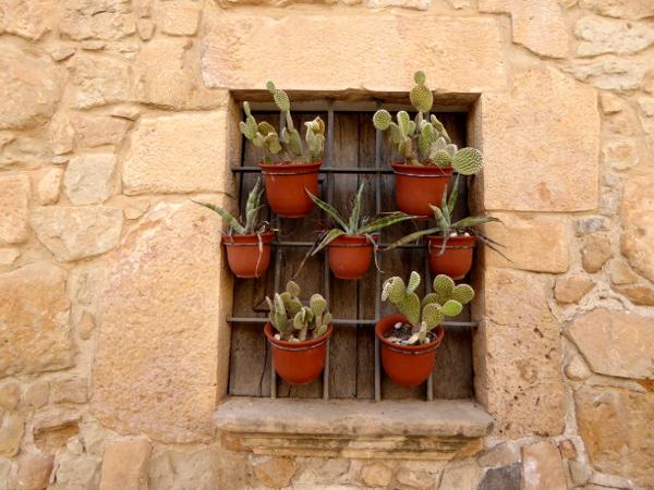 Fenster Kakteen Torrebesses Freibeuter Reisen