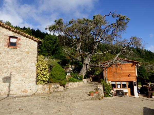 montseny masia buxaus freibeuter reisen Baum