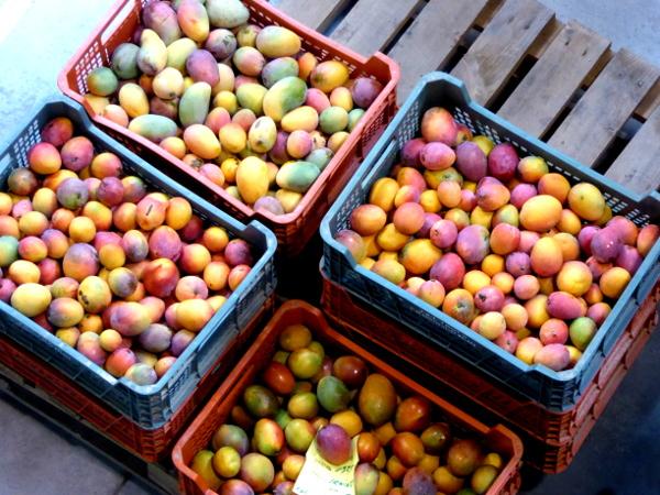 axarquia-malaga-trops-mangos-freibeuter-reisen