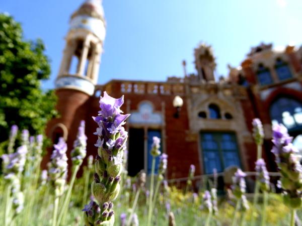hospital-sant-pau-santa-creu-barcelona-lavendel-freibeuter-reisen