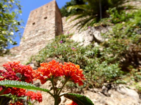 malaga-alcazaba-maurische-festung-blume-freibeuter-reisen