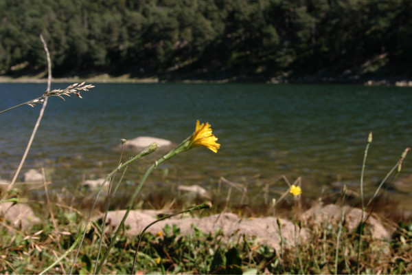 andorra-llac-see-engolasters-freibeuter-reisen-blume