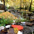 Waldbaden - Badetag in den Pyrenäen 9
