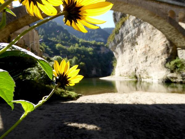 blume-gorges-du-tarn-lozere-freibeuter-reisen