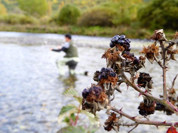 brombeeren-fliegenfischen-vall-de-boi-freibeuter-reisen