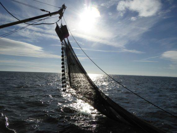 Strandräuber und Krabbenfischer - Leben mit dem Meer 10