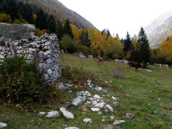 kuhweide-vall-de-boi-freibeuter-reisen