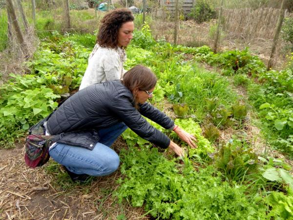 salat-ernten-biogarten-portugal-hotel-areias-do-seixo-freibeuter-reisen