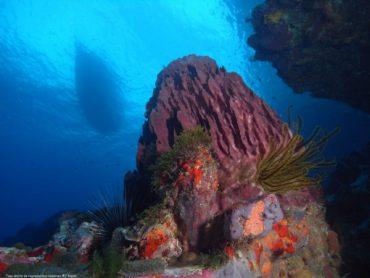 Tauchen auf Martinique - der Diamantfelsen 10