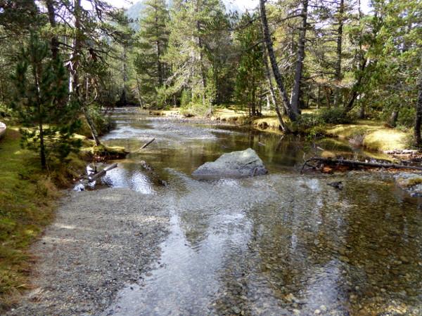 baum-im-fluss-nationalpark-aigueestortes-freibeuter-reisen