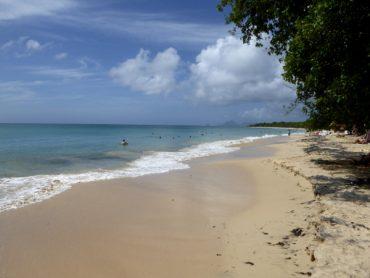 Traumhafte Strände auf Martinique: Unter Palmen 2