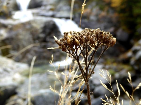diestel-wasserfall-nationalpark-aigueestortes-freibeuter-reisen