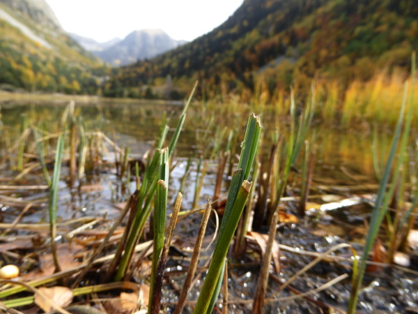gras-ufer-nationalpark-aigueestortes-freibeuter-reisen