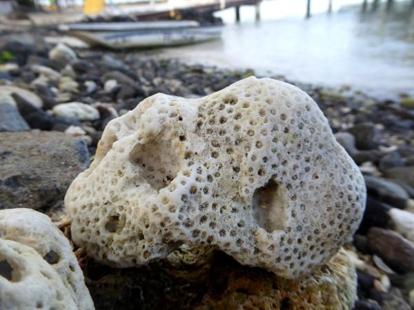strände -koralle-stein-hotel-baoua-pointe-du-bout-strand-martinique-freibeuter-reisen