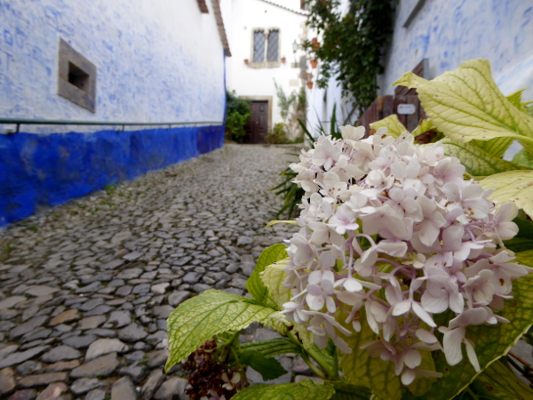 obidos-portugal-freibeuter-reisen-blumen