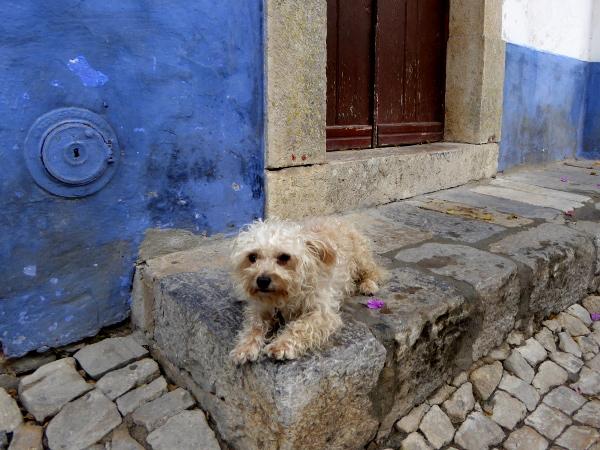 obidos-portugal-freibeuter-reisen-hund
