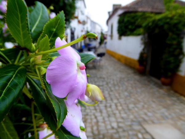 obidos-portugal-freibeuter-reisen-rosa-blume