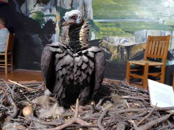 geier-ausstellung-maison-vautours-lozere-freibeuter-reisen