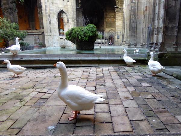 kathedrale-barcelona-gaense-freibeuter-reisen