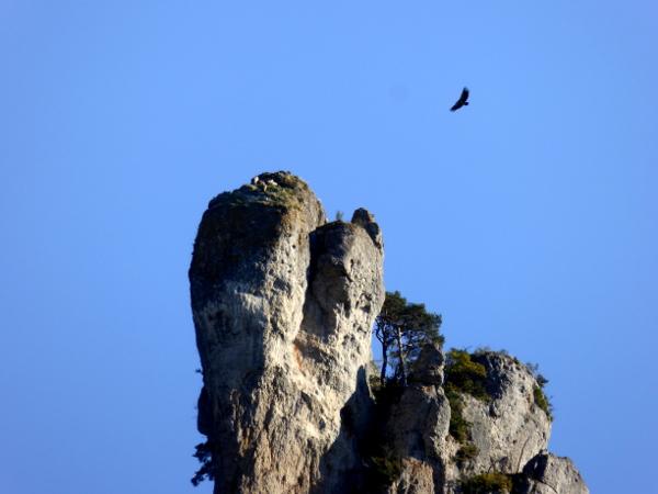 geier-im-nest-lozere-gorges-de-la-jonte-freibeuter-reisen
