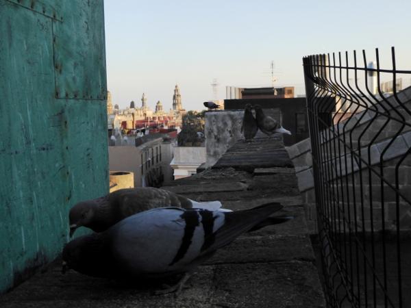 gurrende-tauben-kathedrale-barcelona-freibeuter-reisen