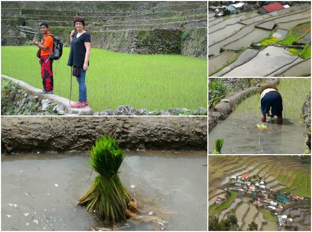 Reisterrassen Banaue Batad Philippinen freibeuter reisen