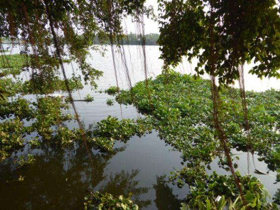 An Lam - grünes Plätzchen am Saigon River 5