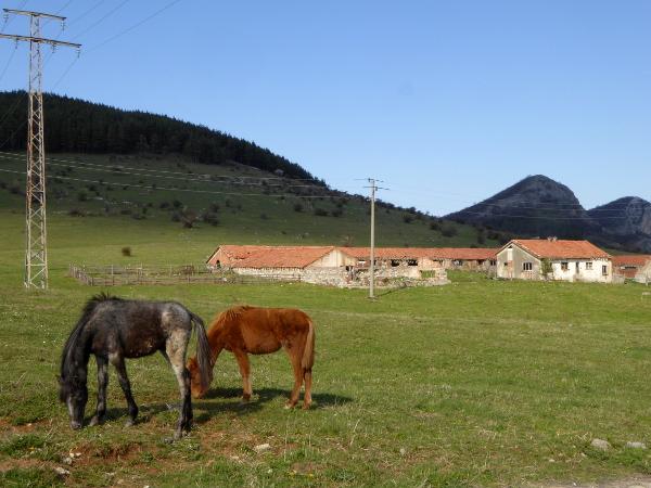 Pferde weide vratsa bulgarien freibeuter reisen