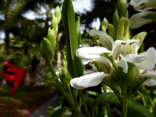 anima garden marrakesch andre heller gaerten loewnmaul freibeuter reisen
